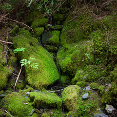 Mossy creek (grimoire42) Tags: moss
