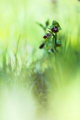 Orchi's Bi's (photosenvrac) Tags: cen bokeh macro nature orchidée