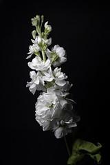 365 - Image 140 - Flowers... (Gary Neville) Tags: 365 365images 6th365 photoaday 2019 sony sonycybershotrx100vi rx100vi vi garyneville