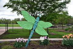 JIM_2870 (James J. Novotny) Tags: dragonflies sculptures sculpture d750 nikon rotarygarden rotarybotanicalgardens gardens garden gardenbotanical unlimitedphotos unlimiedphotos unlimited art artwork