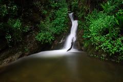 Piccola cascata nella foresta (Darea62) Tags: waterfall forest nature wood outside longexposure malbacco seravezza versilia stream creek torrente bosco