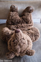Sinnvolle Zeitausnutzung --- Sensible use of time (der Sekretär) Tags: bär möbel möbelstück plüschtier samt sessel spielzeug stoff teddy teddybär textilien tier animal bear chair fabric fabrics furniture itemoffurniture pieceoffurniture softtoy stuffedtoy teddybear toy velvet