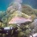 North Hastings Reef