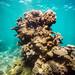 Saxon's Reef