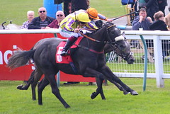 """Racingtv.com EBF Novice Auction Stakes"" (Plus 10 Race) (Div I) (Oporto75) Tags: racingtvcomebfnoviceauctionstakes plus 10 race div i 1st 5 troubador 281 2nd 1 insania 118f 3rd 2 bobs oss 401 7 ran"