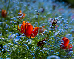 Sea of Flowers (WestEndFoto) Tags: agenre export floralphotography flower bc bsubject 20140712 20140706 westend vancouver flickrjeffpj flickrwestendfoto plant flickr queueparkepnextinline canada dgeography naturephotography natural fother