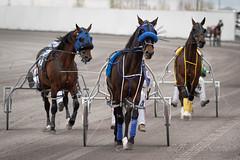 Century Downs Racetrack (tallhuskymike) Tags: centurydowns racing race horse horses balzac alberta 2019 action event outdoors