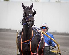 Century Downs Racetrack (tallhuskymike) Tags: centurydowns racing race horse balzac alberta 2019 action event outdoors
