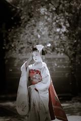 Maiko_20190409_121_6 (Maiko & Geiko) Tags: 20190409 myokenji temple kanohisa kyoto maiko 舞妓 妙顕寺 叶久 京都 叶家 kanoya ksumika