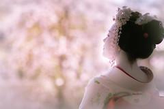 Maiko_20190409_121_8 (Maiko & Geiko) Tags: 20190409 myokenji temple kanohisa kyoto maiko 舞妓 妙顕寺 叶久 京都 叶家 kanoya ksumika