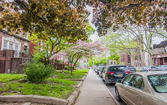 1381_1025FL (davidben33) Tags: brooklyn newyork crownheights streetphotos street photos trees bushes flowers flowering blooming blossoming irises architecture landscape cityscape houses buildings jewish people 718