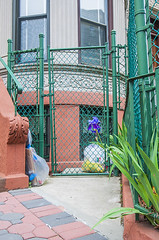 1381_1001FL (davidben33) Tags: brooklyn newyork crownheights streetphotos street photos trees bushes flowers flowering blooming blossoming irises architecture landscape cityscape houses buildings jewish people 718