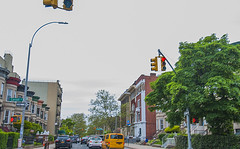 1381_0997FL (davidben33) Tags: brooklyn newyork crownheights streetphotos street photos trees bushes flowers flowering blooming blossoming irises architecture landscape cityscape houses buildings jewish people 718