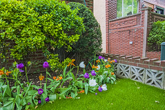 1381_1038FL (davidben33) Tags: brooklyn newyork crownheights streetphotos street photos trees bushes flowers flowering blooming blossoming irises architecture landscape cityscape houses buildings jewish people 718