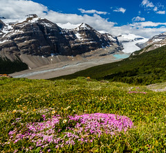 Regrowth (A Camera Story) Tags: nationalparks alberta banffnationalpark canada canadianrockies columbiaicefield glacier hiking icefieldsparkway parkerridgetrail saskatchewanglacier
