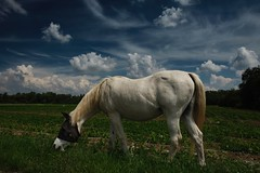 Jenny... (hobbit68) Tags: fujifilm xt2 frankfurt fechenheim animal horse pferd natur tier sky himmel wolken clouds gras rasen tree baum