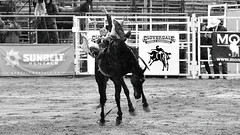 _PCR6950 (FunkyPepper) Tags: 16x9 bw clackandwhite cowboy horse rodeo