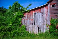 Rustic old barn on Leading Creek Road in Meigs County, Southeastern Ohio (diana_robinson) Tags: rustic oldbarn abandoned weathered wood leadingcreekroad meigscounty southeasternohio ohio