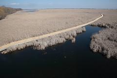The Marsh Boardwalk (peterkelly) Tags: digital canon 6d northamerica marshboardwalk pointpeleenationalpark ontario canada marsh boardwalk water spring trail path lakeerie greatlakes