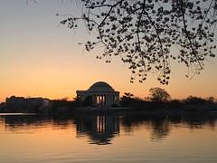 IMG_4015 (francesxcabrini) Tags: cherry blossoms cherryblossoms washingtondc flowers sunrise jeffersonmemorial washingtonmonument tidalbasin
