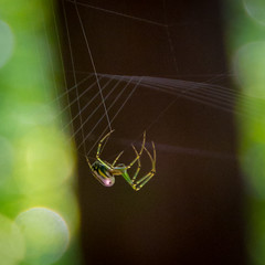 Spinning the morning web (rb0321) Tags: spiderweb spider
