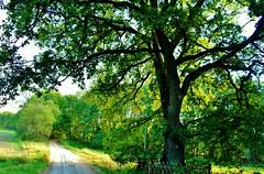 2012-10-02 okolice Loryńca  (143) (aknad0) Tags: polska loryniec krajobraz las drzewa