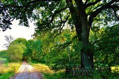 2012-10-02 okolice Loryńca  (142) (aknad0) Tags: polska loryniec krajobraz las drzewa