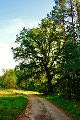 2012-10-02 okolice Loryńca  (131) (aknad0) Tags: polska loryniec krajobraz las drzewa