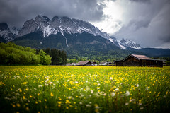 Zugspitzblick (Chris Buhr) Tags: wiese blumen spring frühling idyll bayern natur bavaria landschaft landscape green zugspitze alpen alps field leica m10 summilux