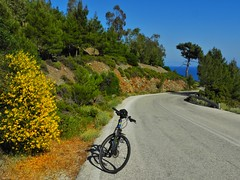 yellow flowers on the road (panoskaralis) Tags: bike cycling road roadtrip trees pine nature outdoor landscape flowers wildflowers plants wildplants yellow spring lesvosisland lesvos mytilene greece greek hellas hellenic greekisland greeknature nikoncoolpixb700 nikon nikonb700 view mountainview mountainside idealbikes