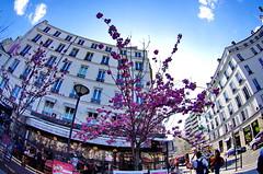 541 Paris en Mars 2019 - en bas de la rue de Ménilmontant (paspog) Tags: paris france mars march märz 2019 fleurs flowers blossoms blumen rueoberkampf ruedeménilmontant