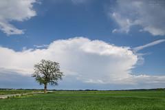 Anvil cloud (wlodiwlodi) Tags: summer poland sky cloud clouds fields field panorama niebo chmury polska dębica podkarpacie lato wiosna 2016 2017 canon drzewo tree