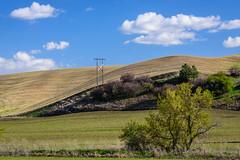 Rolling wheat fields (Richard McGuire) Tags: palouse steptoebutte washington landscape