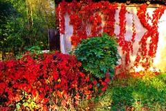2012-10-02 Loryniec (138) (aknad0) Tags: polska loryniec krajobraz wieś budynki drzewa