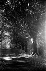 bessarf016 (salparadise666) Tags: voigtländer bessa rf skopar 105mm fomapan 100 caffenol rs 25min nils volkmer vintage folder folding analogue film camera 6x9 landscape bw black white monochrome hannover region niedersachsen germany