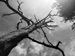 Look Up (riverunbounded) Tags: tree monochrome blackandwhite hike outdoors nature colorado