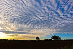 Evening mackerel sky (Ugborough Exile) Tags: gnosall stafford staffordshire midlands england uk sony rx100vi 2019 flickr