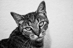 Tico Tico (annie.cure) Tags: canon cat camera 750d porto portugal portrait animal atmosphere texture mysterious eyes fur monochrome mood noise blackandwhite view details dark tico effect light look nature cute pet background