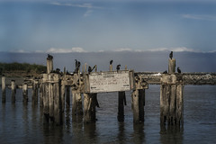 Moss Landing Harbor Masters (waves_and_wonders) Tags: monterey bay blue nautical sea ocean coast coastal photography art fineart waves water beach sky nature clouds california central centralcoast mosslanding harbor sealife seascape landscape outdoors oceanic