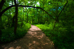 Listening to the Leaves (KC Mike Day) Tags: parkville missouri nature sanctuary path trail green grass leaves trees branch fallen arch pathway