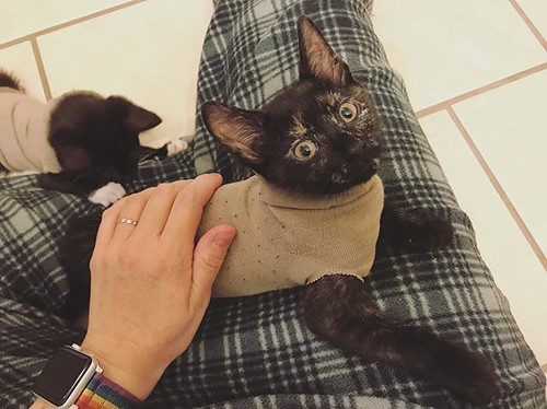 Andy and Spicy got fixed today so they can go to their forever home this weekend. To help protect their incisions, we made sock sweaters for them. 😂 . . . . . . . . _____________________________________ Interested in adopting? 🐱 Contact me or @hes