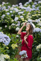 TOM09595 (HwaCheng Wang 王華政) Tags: hydrangea 人像 外拍 時裝 陽明山 繡球花 md model portraiture sony a7r3 ilce7rm3 a7r mark3 a9 ilce9 24 35 85 gm dress flower
