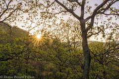 Morning Has Broken (Singing Like Cicadas) Tags: 2019 spring may outdoors nature mountains dawn appalachia westvirginia almostheaven countryside sunrise vacation 1000gifts hardycounty onethousandgifts