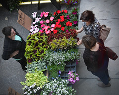 Flower table, Nicollet Mall Farmers' Market (schwerdf) Tags: downtownminneapolis minneapolis minnesota nicolletmallfarmersmarket
