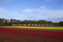 Lineas 7772 + 7779 + dolomiettrein 47628 Veendam - Hermalle  - Beilen (Rene_Potsdam) Tags: lineas hooghalen europe europa trains trenes railroad railways treinen züge drenthe nederland