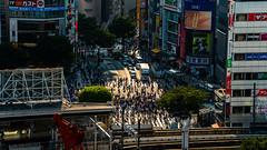 DSC_0258 (Adrian De Lisle) Tags: asia city cityscape crosswalk crowd japan people shibuya shibuyacrossing shibuyahikarie sunset tokyo train trainstation shibuyaku tōkyōto