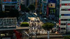 DSC_0046 (Adrian De Lisle) Tags: asia city cityscape crosswalk crowd japan people shibuya shibuyacrossing shibuyahikarie sunset tokyo train trainstation shibuyaku tōkyōto