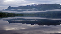 En god morgen -|- Good morning (erlingsi) Tags: mist tåke rotevatn volda sunnmøre lake reflection seagul takeoff bird skremt fugl