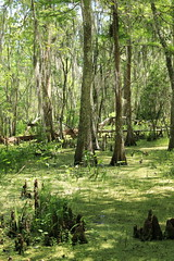 Bayou (Zach Hawn) Tags: gulfcoast ussouth south southernus gulfofmexico wildlife animals nature naturenerd outdoors biodiversity gulfstates naturalist baratariapreserve jeanlafittenationalhistoricalpark nationalpark nps louisiana wildlifepreserve wildliferefuge travel nationalparksservice