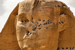 Plumed visitors ©twe2007☼ (theWolfsEye☼) Tags: thewolfseye egypt aegypten giza gizeh sphinx birds vögel tauben pigeons plumed gefiedert thegreatsphinx thegreatsphinxofgiza thesphinx